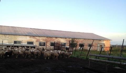 Продам ферму - Фото 3