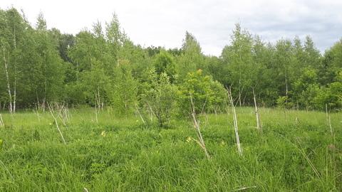 30 соток на окраине СНТ Опцион, Заокский р-он 105 км от МКАД - Фото 5