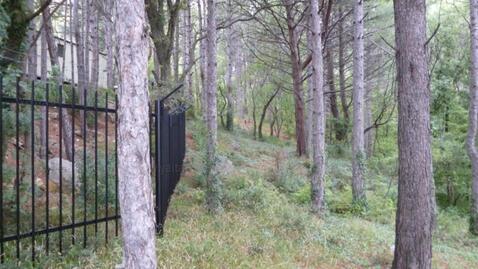 Срочная продажа 20 соток в Алупке в сосновом лесу - Фото 3