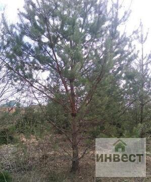 Продается земельный участок 9 соток, д.Купелицы, СНТ Купелицы - Фото 3