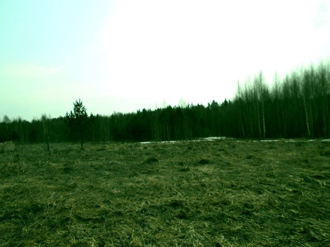 Судогодский р-он, Колесня д, земля на продажу - Фото 1