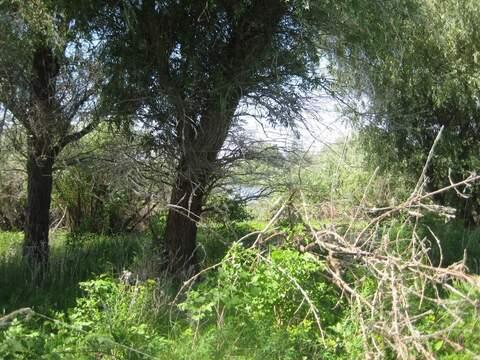 Продам землю на острове в Енотаевском районе - Фото 3