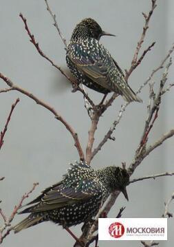 птица средней полосы крупного размера 2058041471