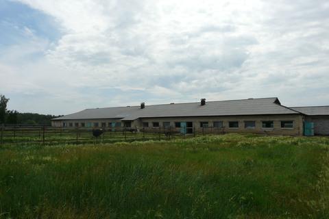 Страусиная ферма - Фото 4