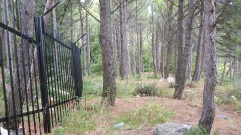 Срочная продажа 20 соток в Алупке в сосновом лесу - Фото 1
