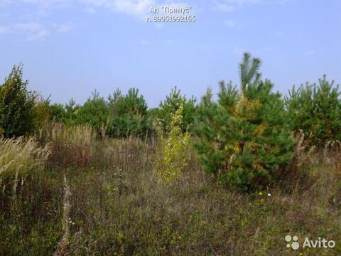 Выращивание и продажа хвойных деревьев - Фото 2
