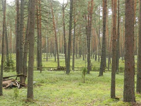 Шикарное место 3 га рекреационной земли (сосновый бор), на реке Волга - Фото 3