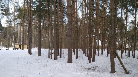 1/2 дома на небольшом клочке земли в окружении столетних сосен, в крас - Фото 5