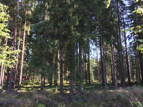 Предлагается участок 30 соток в ДНП Медное озеро в 18 кв от КАД - Фото 3