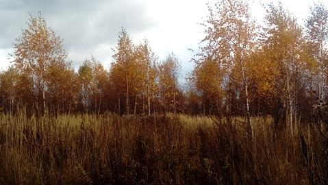 Большое Петровское 8 соток с лесными деревьями, ИЖС. - Фото 3