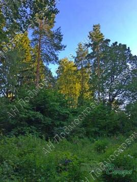 Волоколамское ш. 25 км от МКАД, Рождествено, Участок 24 сот. - Фото 3