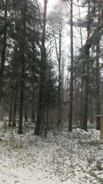 12 соток с Лесными Деревьями. - Фото 3