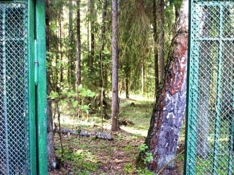 Дачный участок 13 соток с домиком 60 м.кв. в п. Бабаево, Рузский район - Фото 5