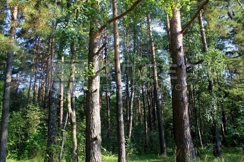 Лесной участок 18.3 сот. - Фото 1