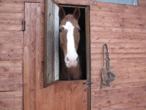 Продается конюшня - Фото 5