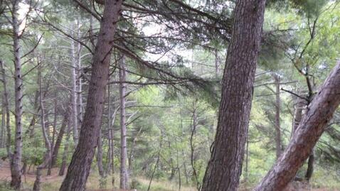 Срочная продажа 20 соток в Алупке в сосновом лесу - Фото 4