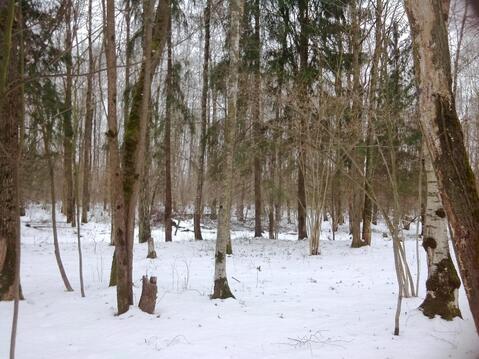Продаётся лесной участок на Калужском шоссе, 18 км. от МКАД рядом с . - Фото 3