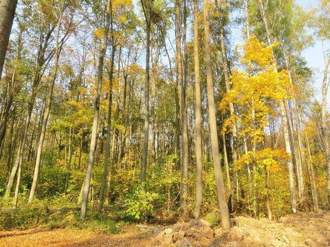Д. Воробьи, участок 29,2 сот в лесу