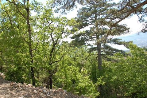 Видовой земельный участок под ИЖС в Массандре, юбк - Фото 2