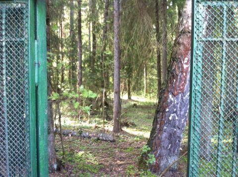 Дачный домик у леса в дачном поселке Бабаево, Рузский район, 93 км. - Фото 2