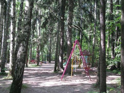 Рублево-Успенское ш. 20км. ран Ново-Дарьино лесной участок 76 соток. - Фото 3