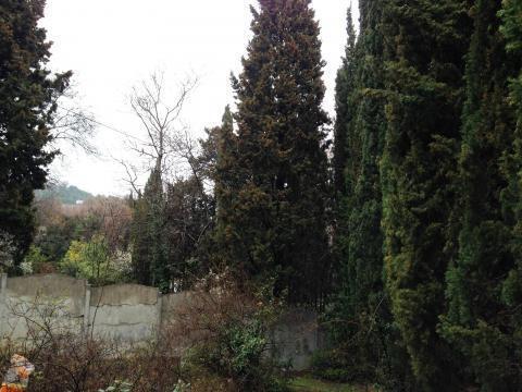 Участок 8 соток в окружении кипариса - Фото 5