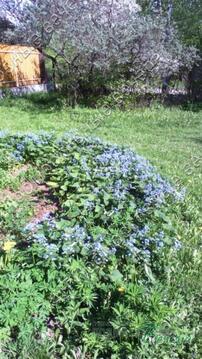 Можайское ш. 20 км от МКАД, Лапино, Дача 60 кв. м - Фото 5