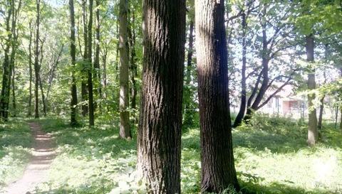 Шикарный участок У леса всего В 9 км от МКАД - Фото 3