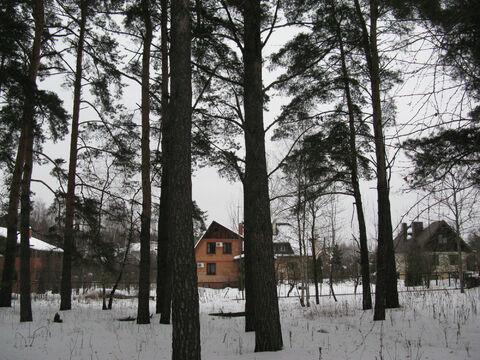 Ильинское . 26км. с. Дмитровское красивый, сосновый участок 30 соток - Фото 4