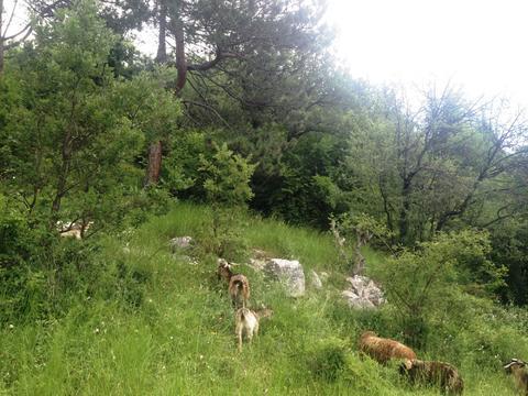 10+10+10 соток в Алупке с панорамным видом, рядом хвойный лес - Фото 2