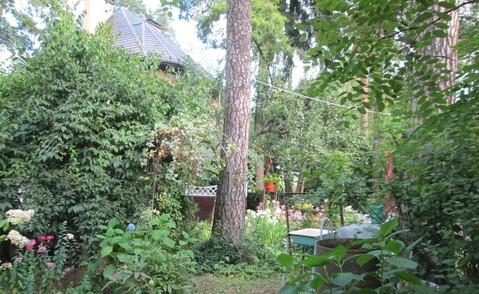 29 соток хвойного леса для постоянного проживания . Закрытый поселок в - Фото 3