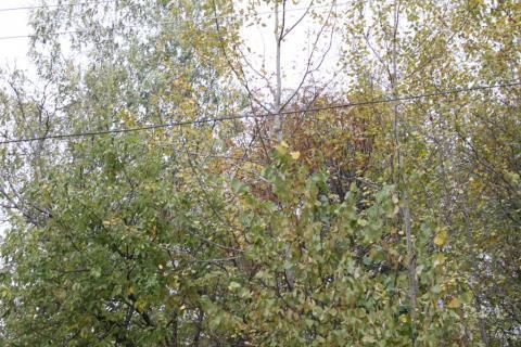 Последний свободный участок в жилом поселке на Риге - рублёвке с ком-и - Фото 1