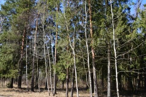 Лесной участок 28 сот. - Фото 4