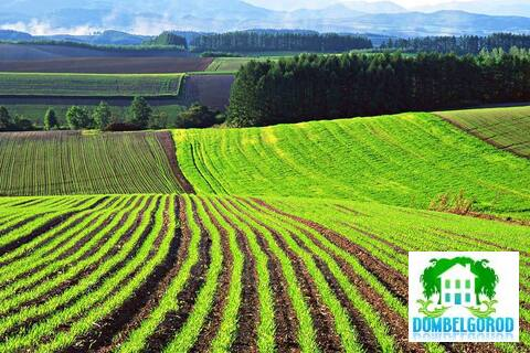 Земля сельхозназначения 25 га Корочанский район