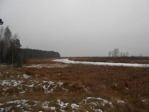 Земельный участок на берегу реки Пра среди соснового бора . - Фото 2