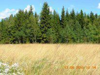 Хороший участок- лес , озеро, дороги, электричество - Фото 4
