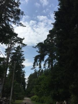 Продается участок 15 сот ИЖС в центре Всеволожска на Алексеевский пр - Фото 4