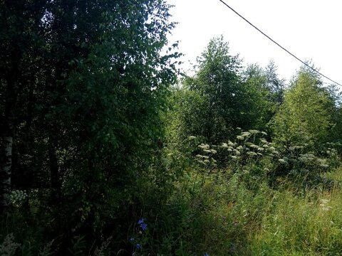 Участок 20 сот в Малахаво, Заокского р-н - Фото 2
