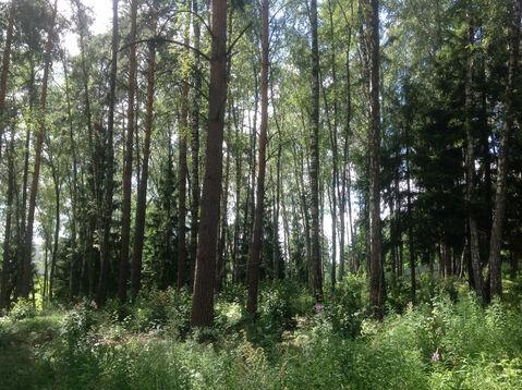 Д. Солослово кп ДПК «Гранит» красивый рельефный лесной участок 1.13 Га - Фото 3