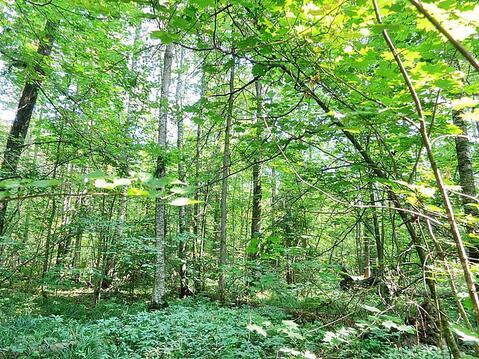 19,1 сотка в лесу газ и свет по границе, 69 км Калужское шоссе - Фото 1