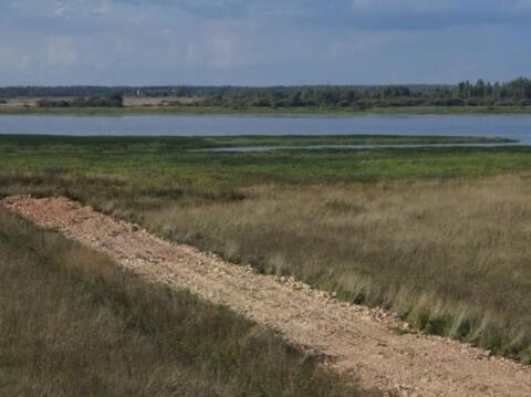Земельный участок. Шимский район, д. Усполонь - Фото 2