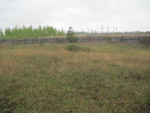 Квадратный участок рядом с хвойным лесом - Фото 2
