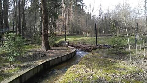 Маслово участок соснового леса 2.5 Га. - Фото 3