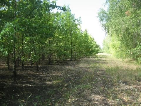 Роща (лесной участок) 330 Га в Воронеже, под дачный поселок. - Фото 4