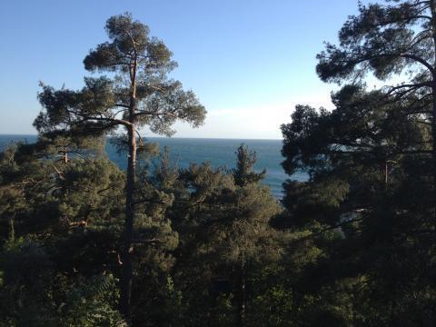 Участок в 100метрах от моря среди сосен ели и кипариса - Фото 5