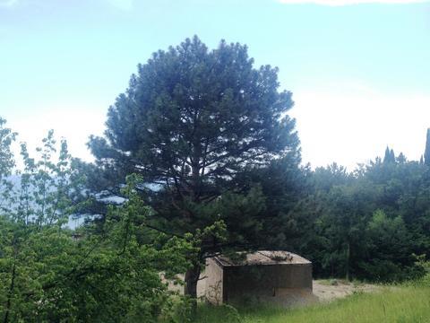 10+10+10 соток в Алупке с панорамным видом, рядом хвойный лес - Фото 3