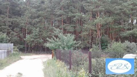 Дача, солотча, агро-пустынь, в сосновом лесу - Фото 3
