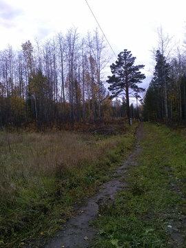 Продам земельный участок под ведение садоводства Рябинино - Фото 3