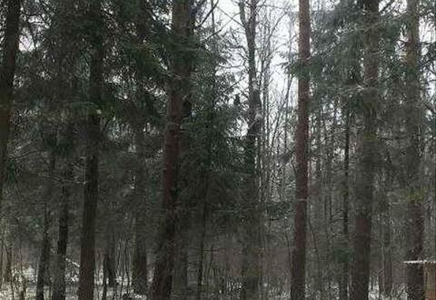12 соток с Лесными Деревьями. - Фото 4