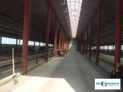 Продажа производственного помещения, Бондарский район, СПК - Фото 5